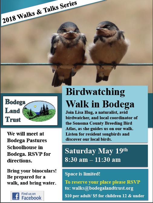 BLT Bird Walk May 19 2018